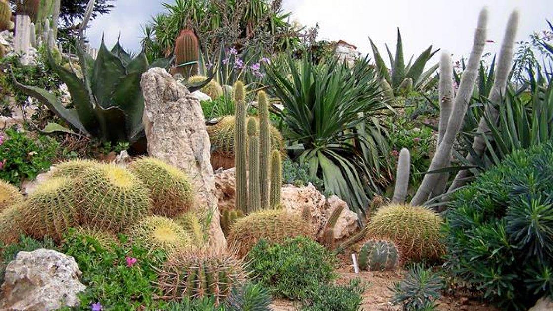 Экзотический Сад Монако - кактусы