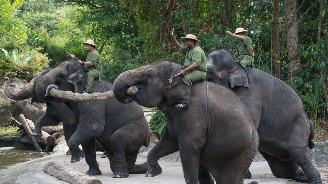 Сингапурский зоопарк - представление слонов