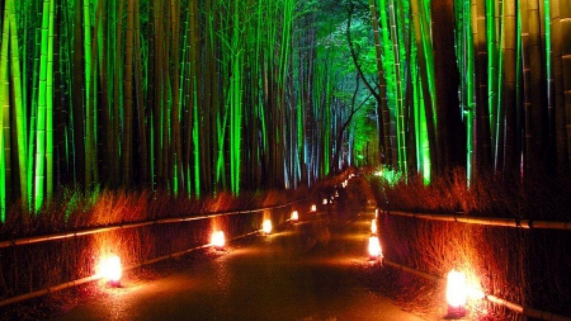 Бамбуковый лес Сагано – ночью