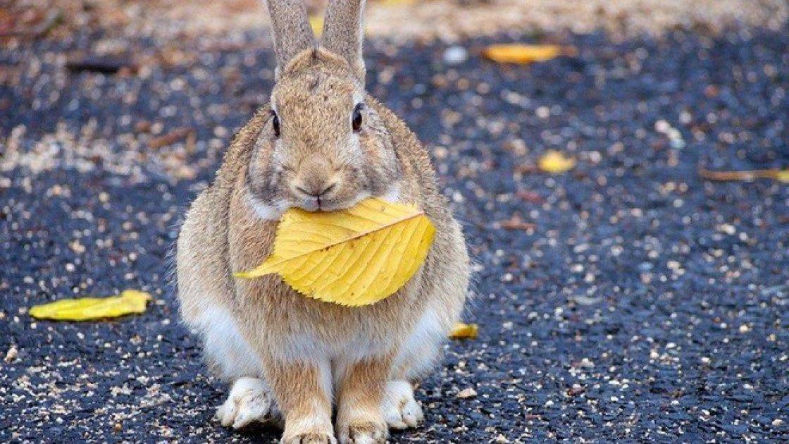 «Остров кроликов» Окуносима в Японии 2