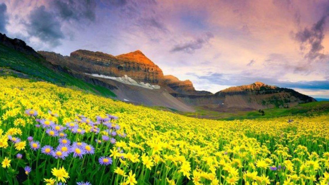 Долина цветов в Индии – 5