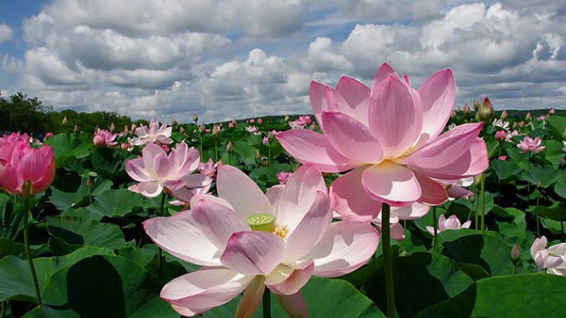 Долина цветов в Индии – 4