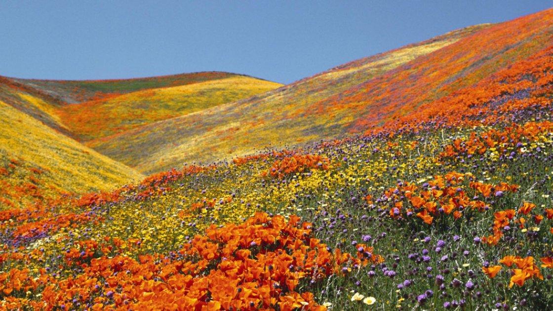 Долина цветов в Индии – 2