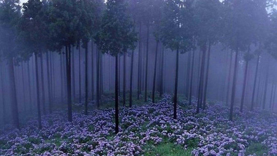 Мистический лес в Японии