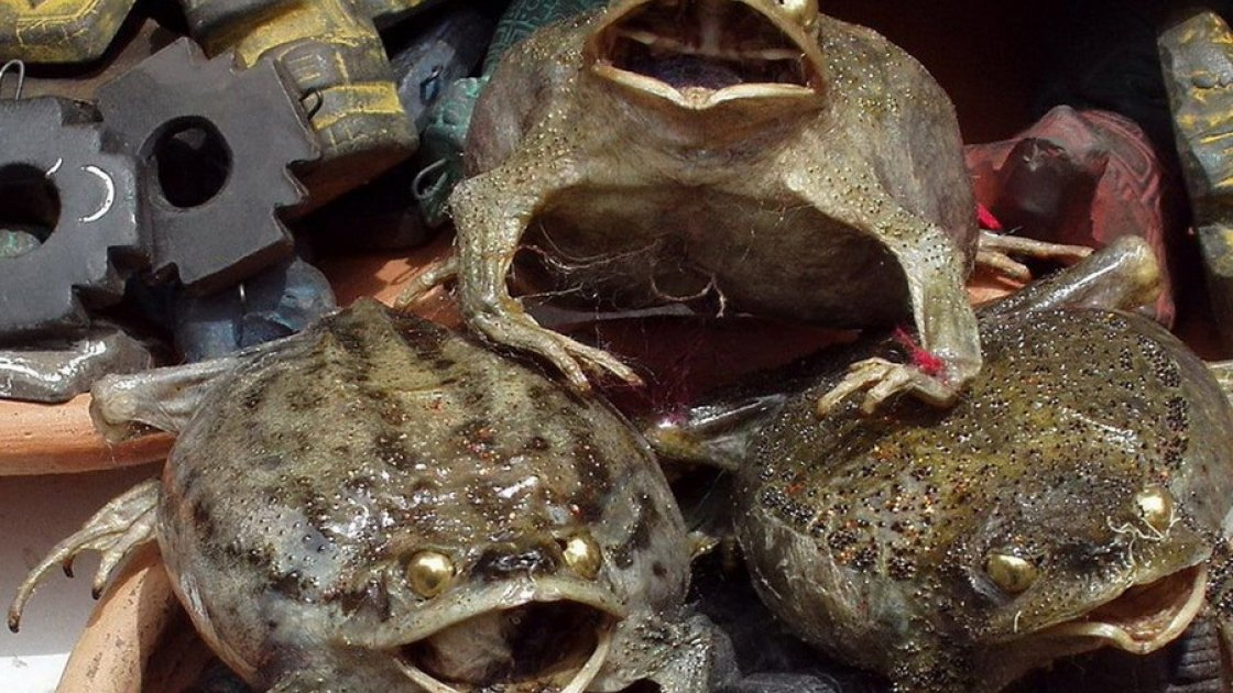 Рынок колдунов Сонора в Мексике 4