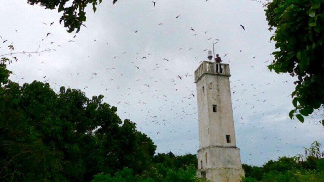 Остров змей Кеймада-Гранди в Бразилии2