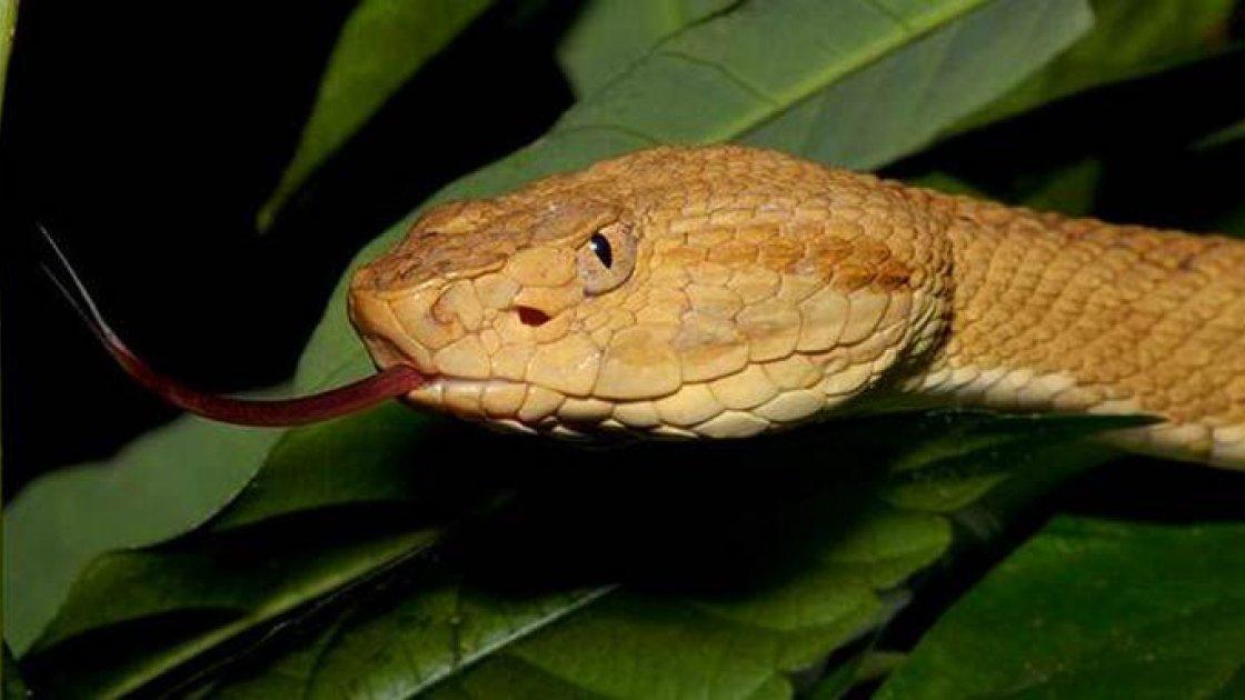 Остров змей Кеймада-Гранди в Бразилии4