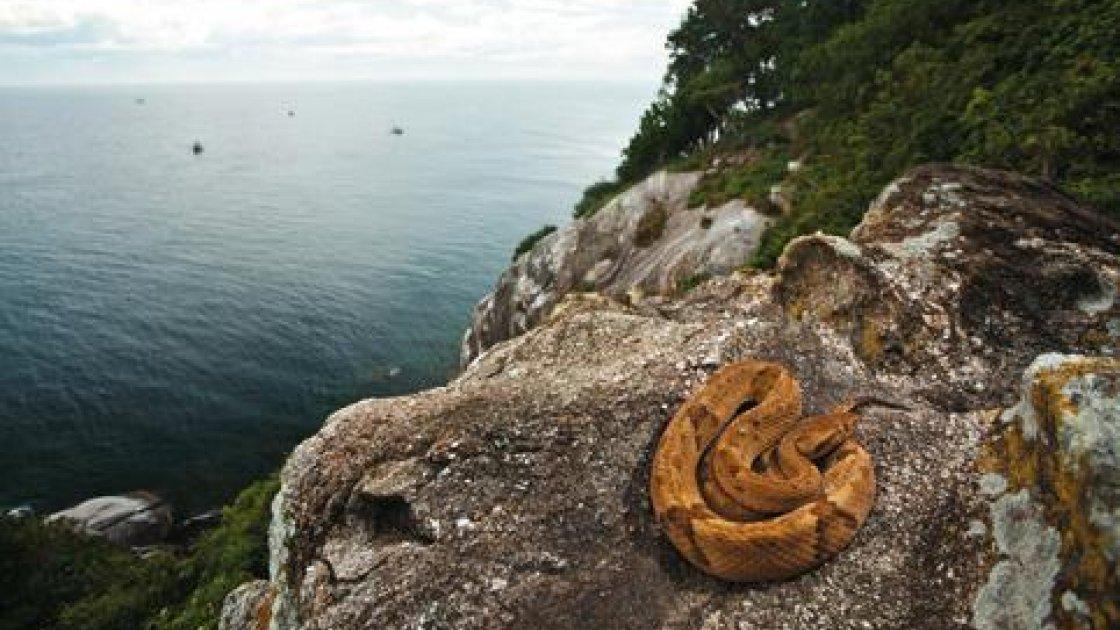 Остров змей Кеймада-Гранди в Бразилии3
