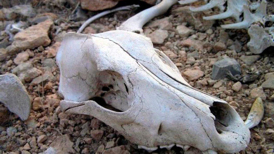 Долина смерти на Камчатке – 2