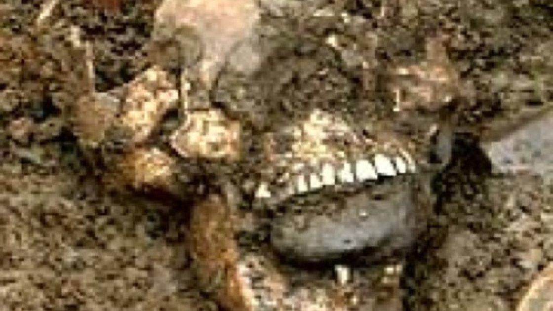 кладбище вампиров4