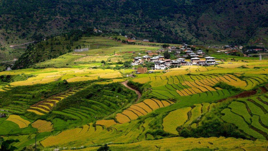 Гнездо тигрицы в Бутане 4