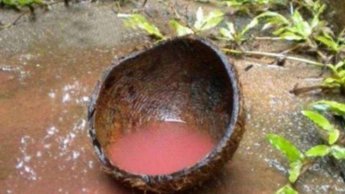 Кровавый дождь в Индии1