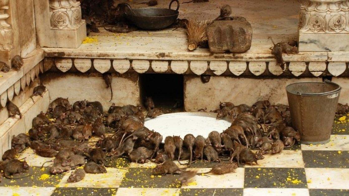 Храм Индии1