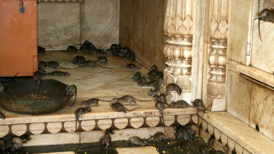 Храм Индии2