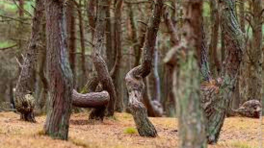 Лес Хоя-Бачу 1