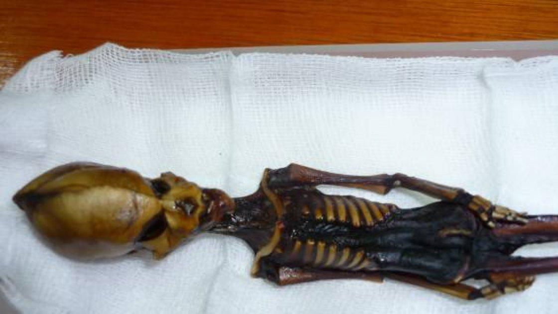 Атакамская мумия 1
