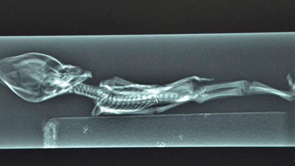 Атакамская мумия 4