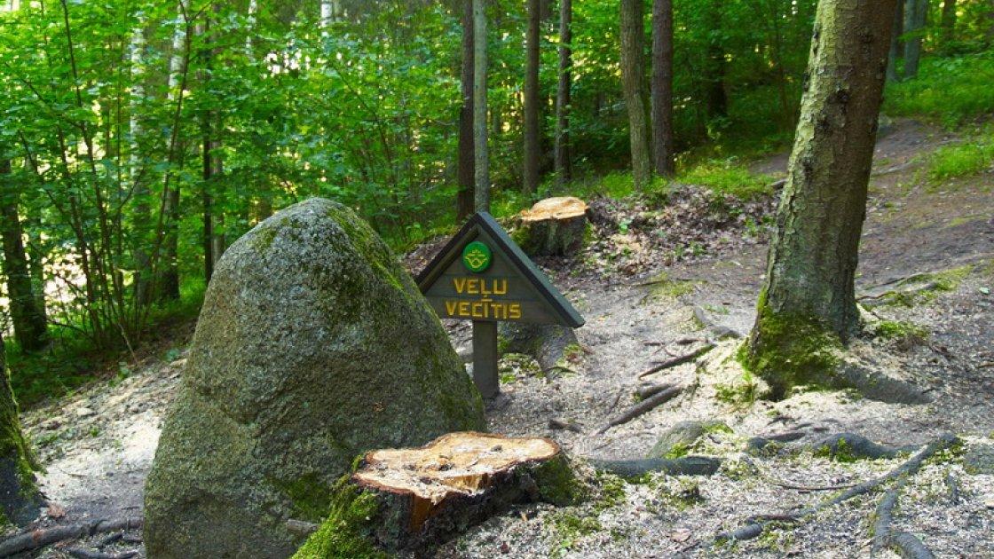 покайнский лес3
