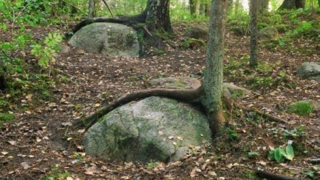 покайнский лес4
