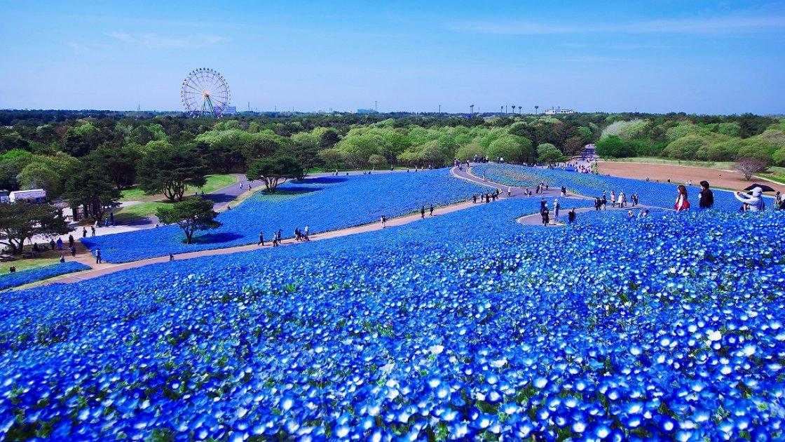 Парк Хитачи4