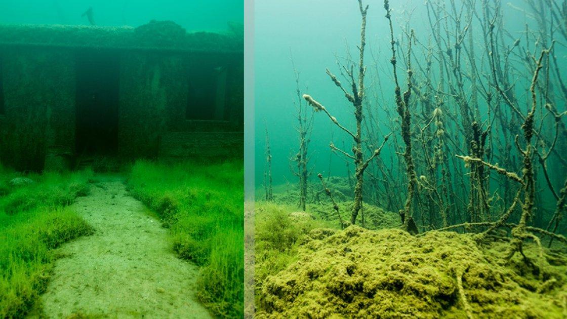 Подводный лес и подводная тропинка