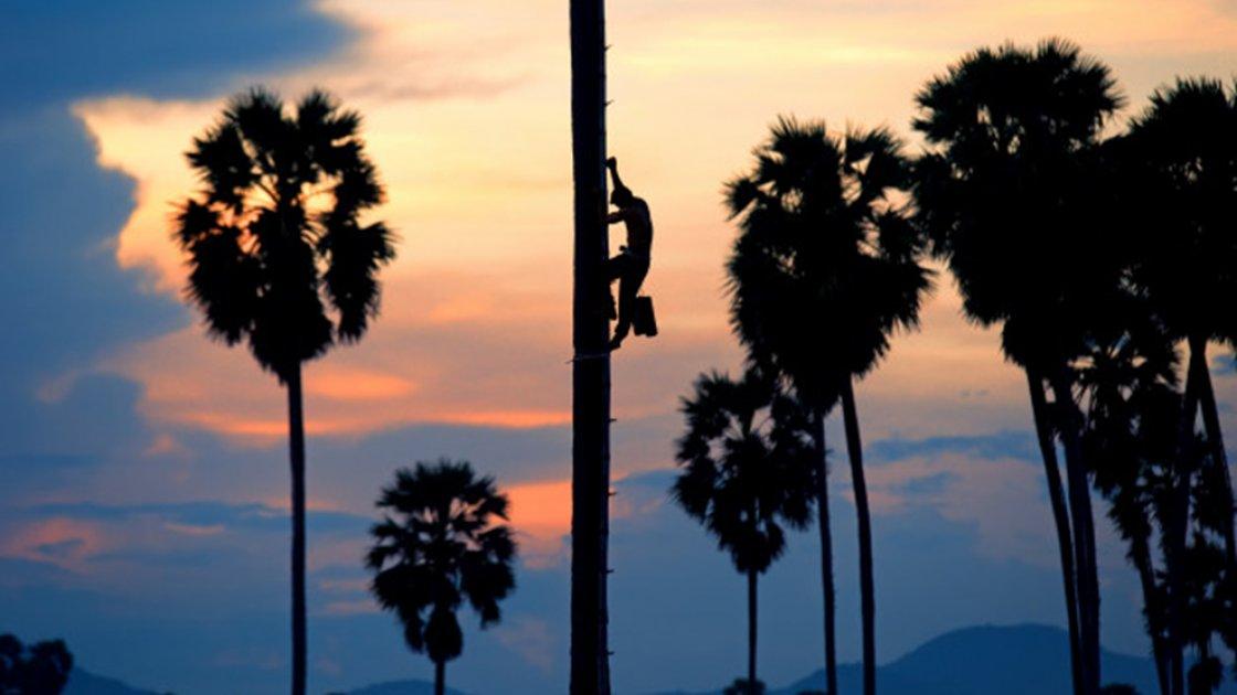 По бамбуку - на пальму