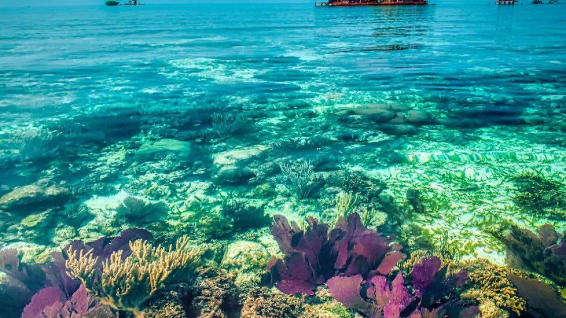 Под водой тоже есть что посмотреть - на заднем фоне Птичий остров